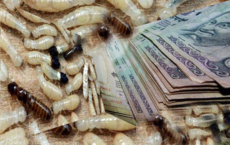 Bank ini rugi gara gara uang 2,15 miliar miliknya ludes dimakan rayap