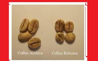 Perkawinan silang kopi arabica dan robusta
