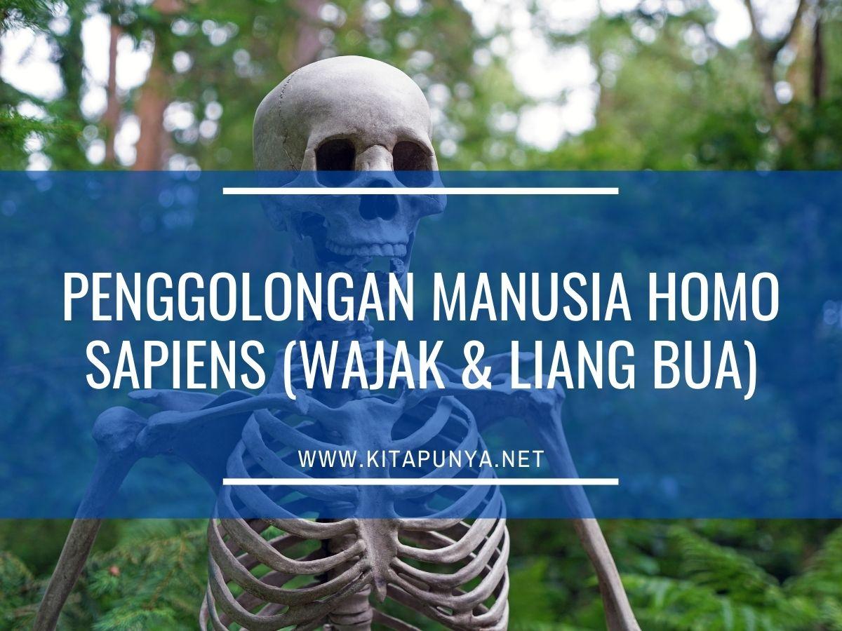 penggolongan manusia homo sapiens
