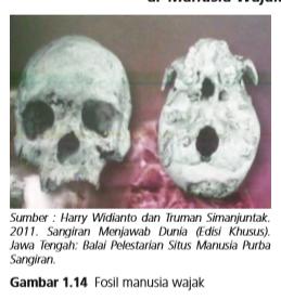 Mengungkap Sejarah Manusia Wajak (Homo Wajakensis)