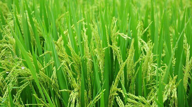 jenis tanaman budidaya